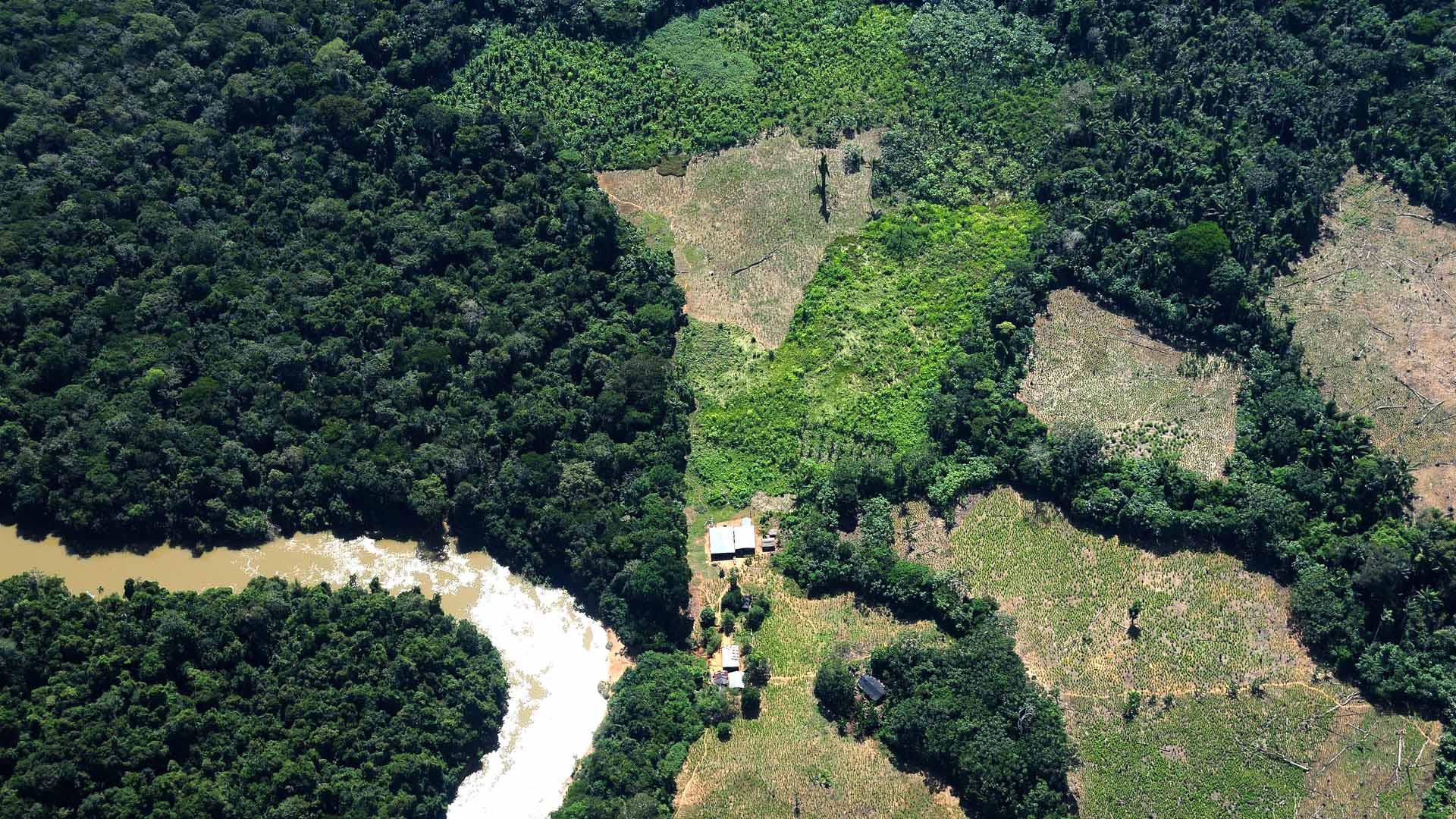 amazonas-deforestación
