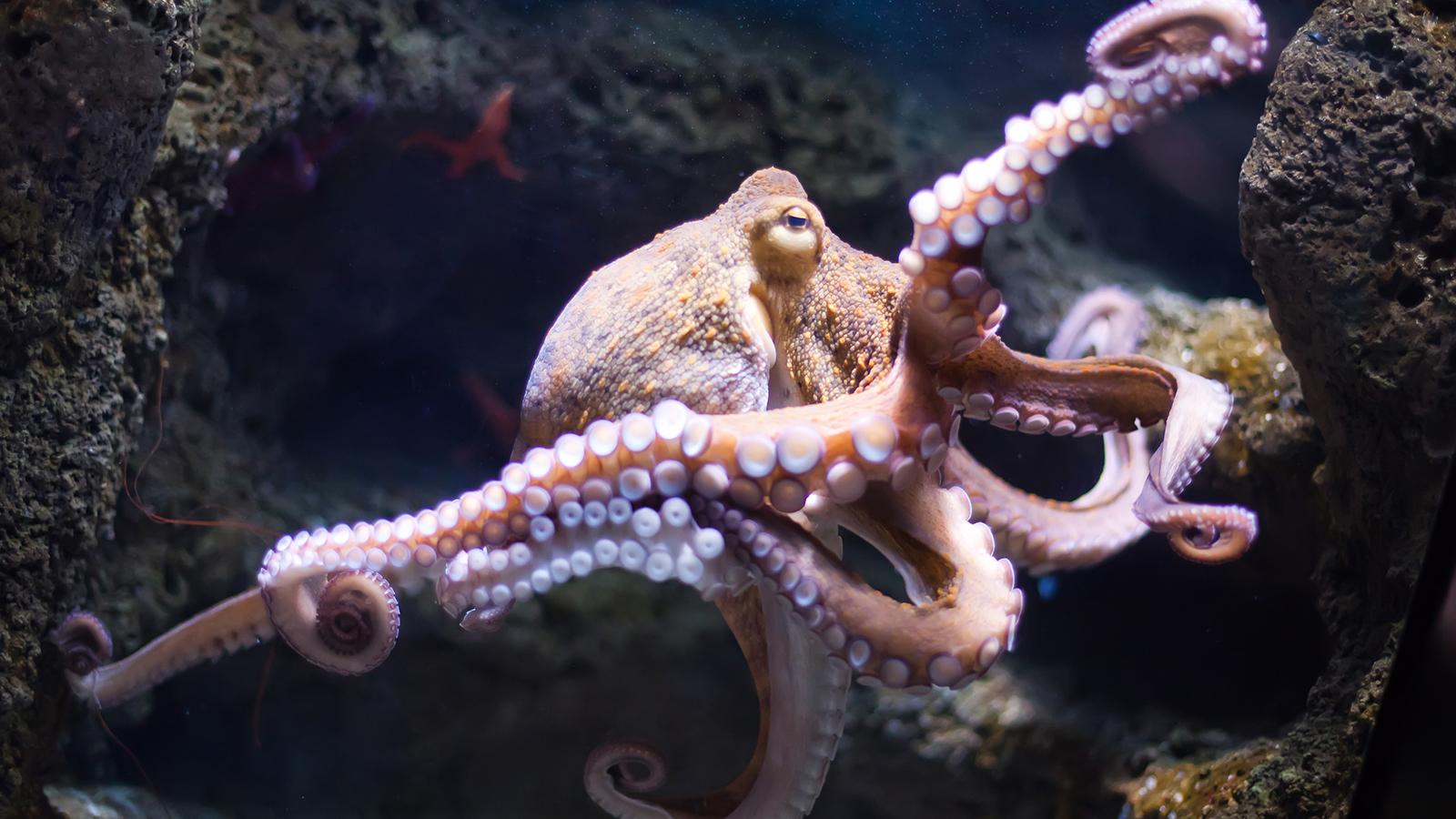 ¿Por qué los calamares podrían ser la solución para reemplazar el plástico?