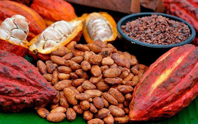 Colombia: país con el mayor índice de consumidores de cacao en el mundo
