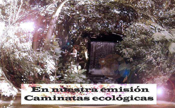 Caminatas ecológicas en Colombia, un recorrido por el mundo natural.
