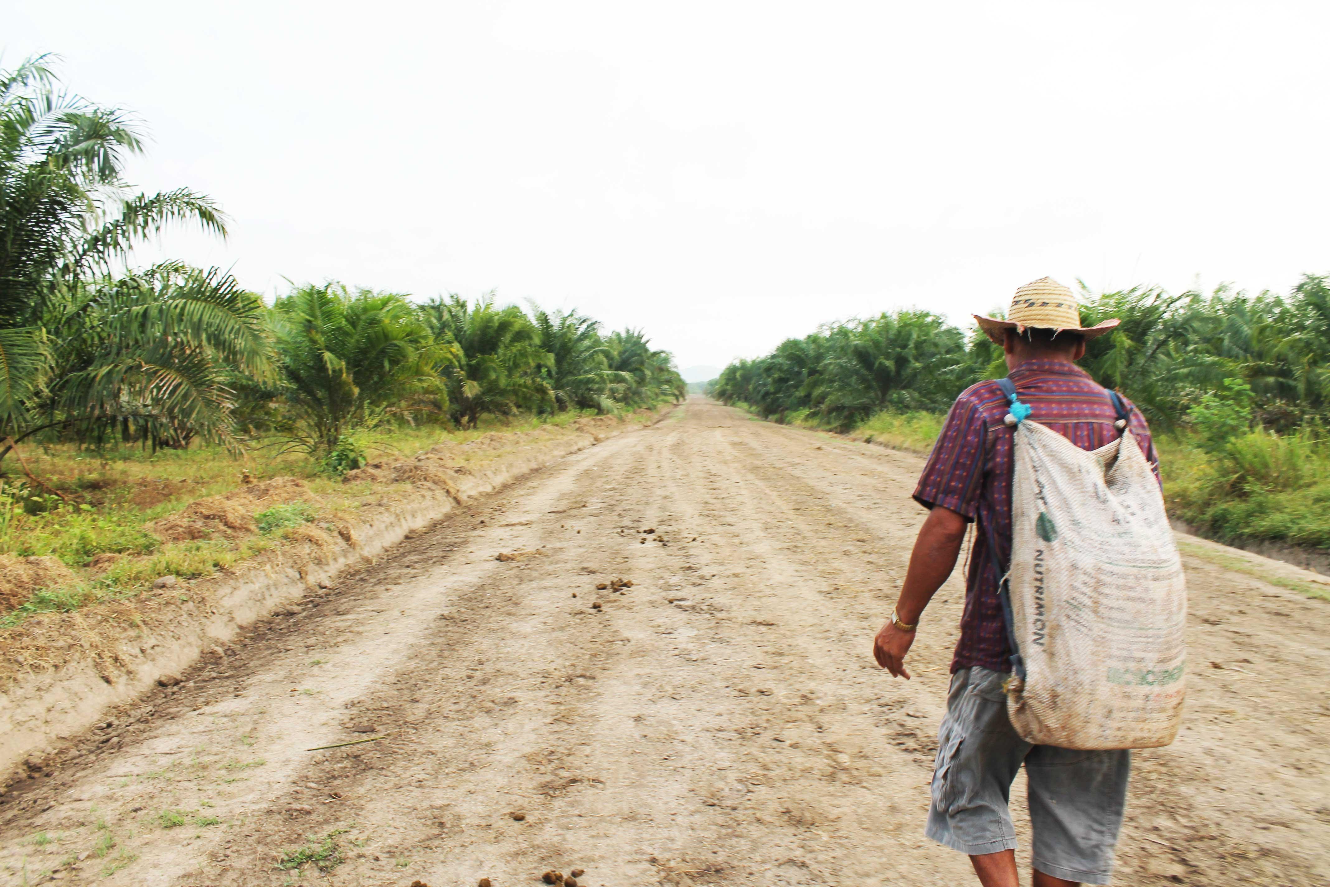 Frenan proceso de compra venta de tierras mientras en algunas zonas del país