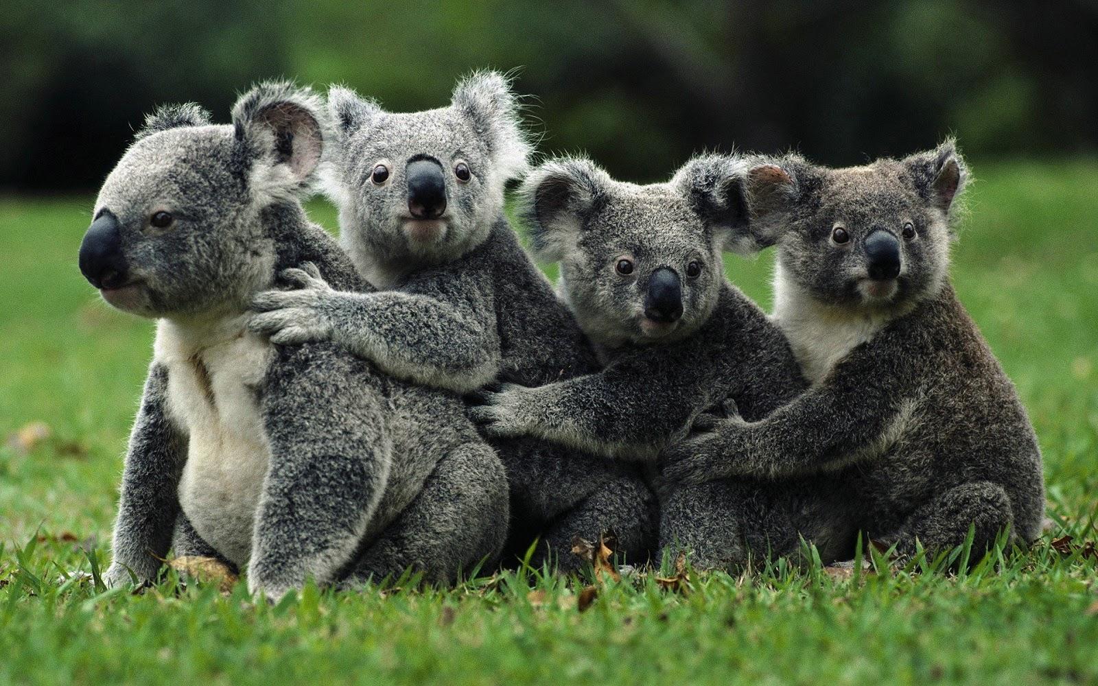 Preocupación a nivel mundial por extinción de algunas especies
