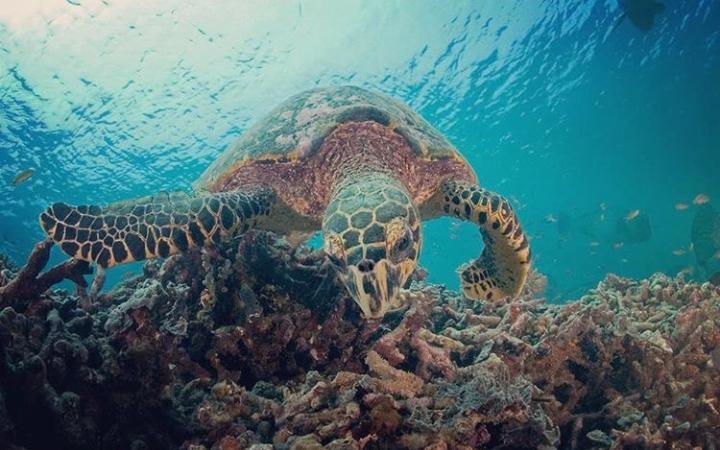 Día Mundial de las Tortugas: Su importancia en la Tierra