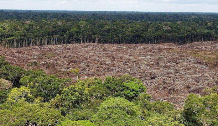 Exterminio ambiental: Deforestación en la Amazonia brasileña