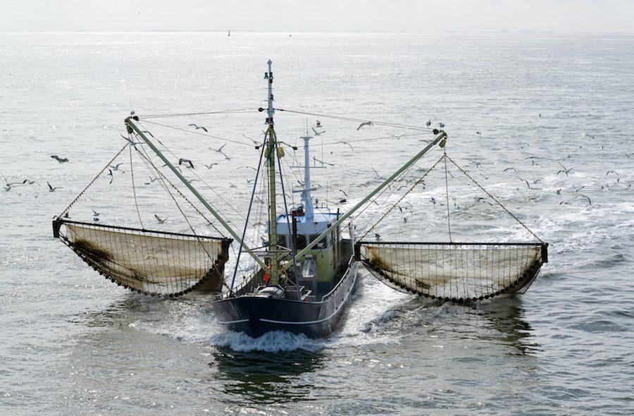 Tiburones oceánicos victimas de la sobrepesca