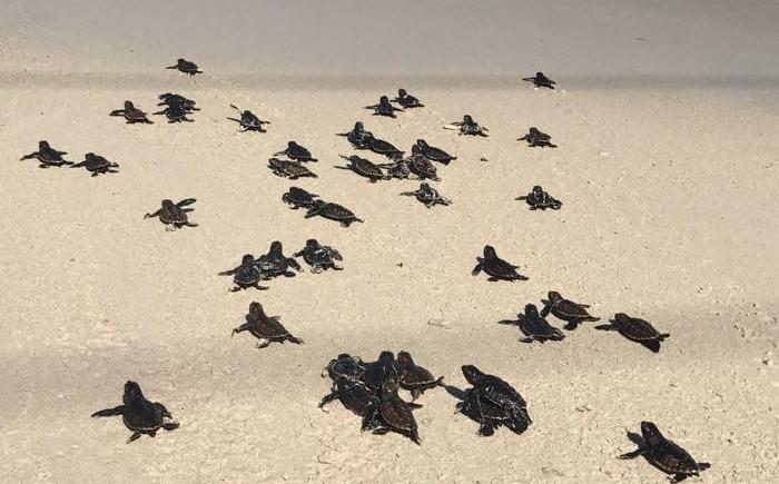 Un turismo responsable y protector en las playas de anidación de tortugas