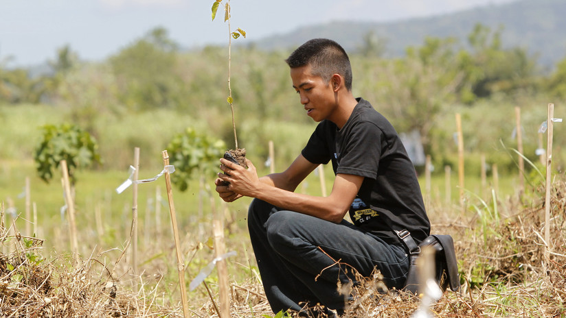 Estudiantes en Filipinas deberán plantar 10 árboles para poder graduarse