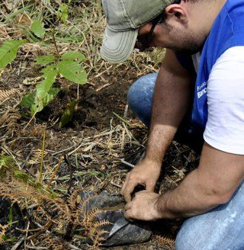 El pasado fin de semana se llevó a cabo una jornada de siembra de especies abóreas en toda la parte afectada por los incendios. Foto suministrada por Parques Nacionales Naturales de Colombia.